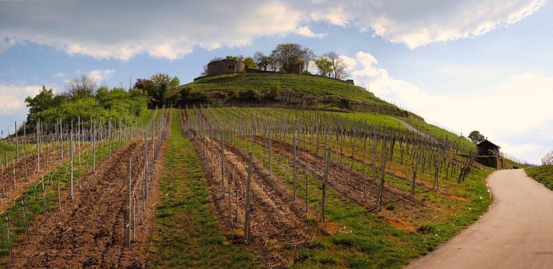 vingårdar ungern